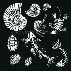Fossil 30 x 30cm Ammonite...